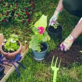 Κηπουρική για αρχάριους – ένας γρήγορος οδηγός
